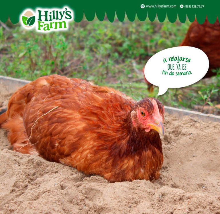 Manejo de redes sociales Hilly's Farm - Lilian Feres